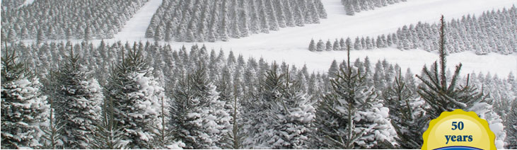 Real Christmas Trees - Cartner Brothers Carolina Fraser Firs