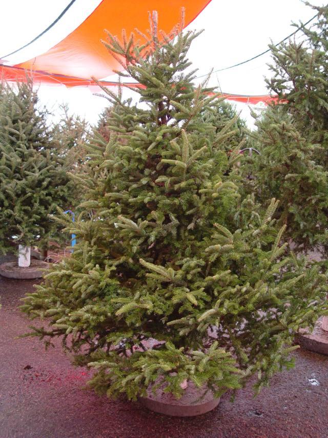 Cartner Christmas Tree Farm | Freshness Problems