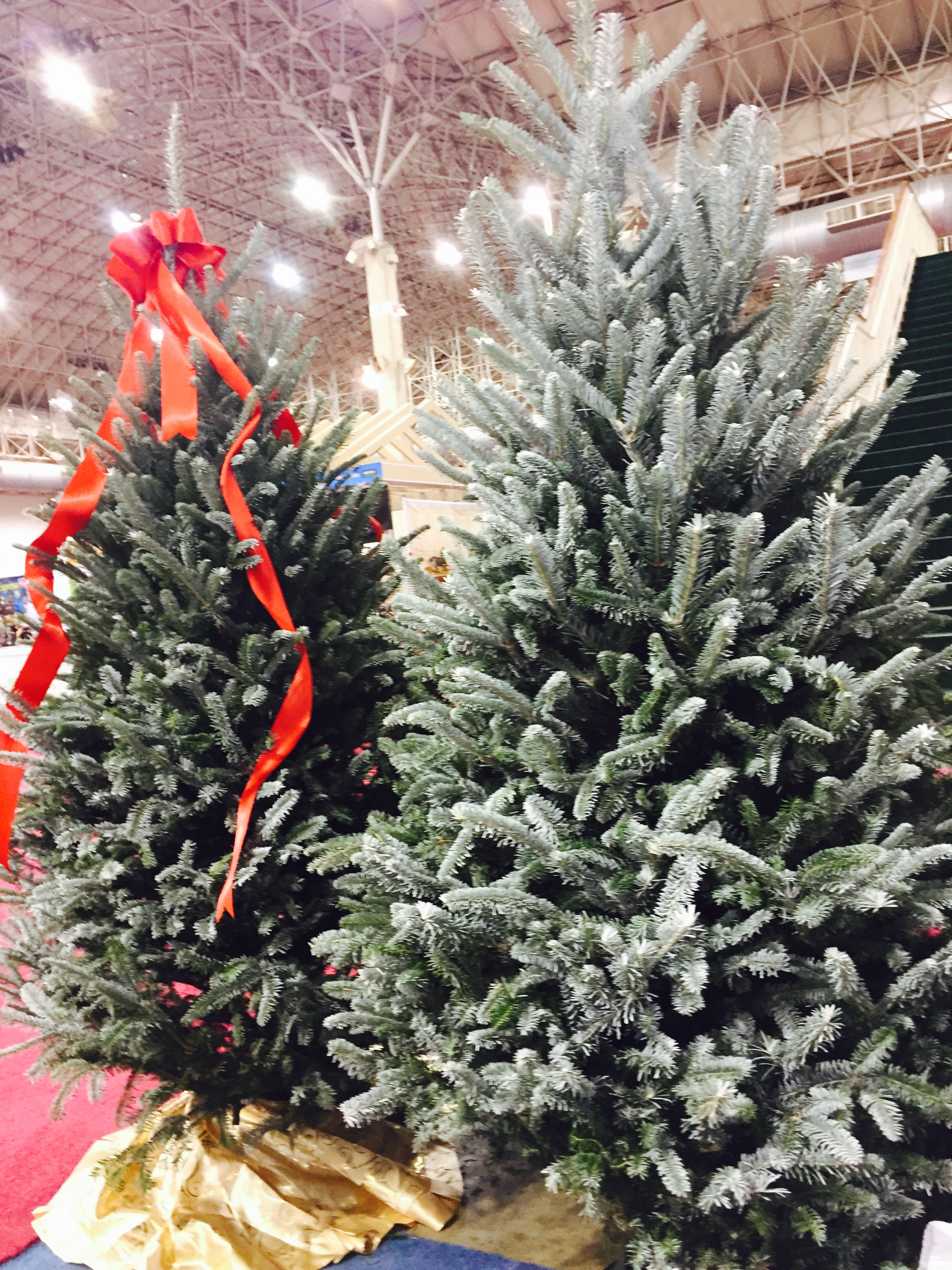 Frosted Firs Trade Show