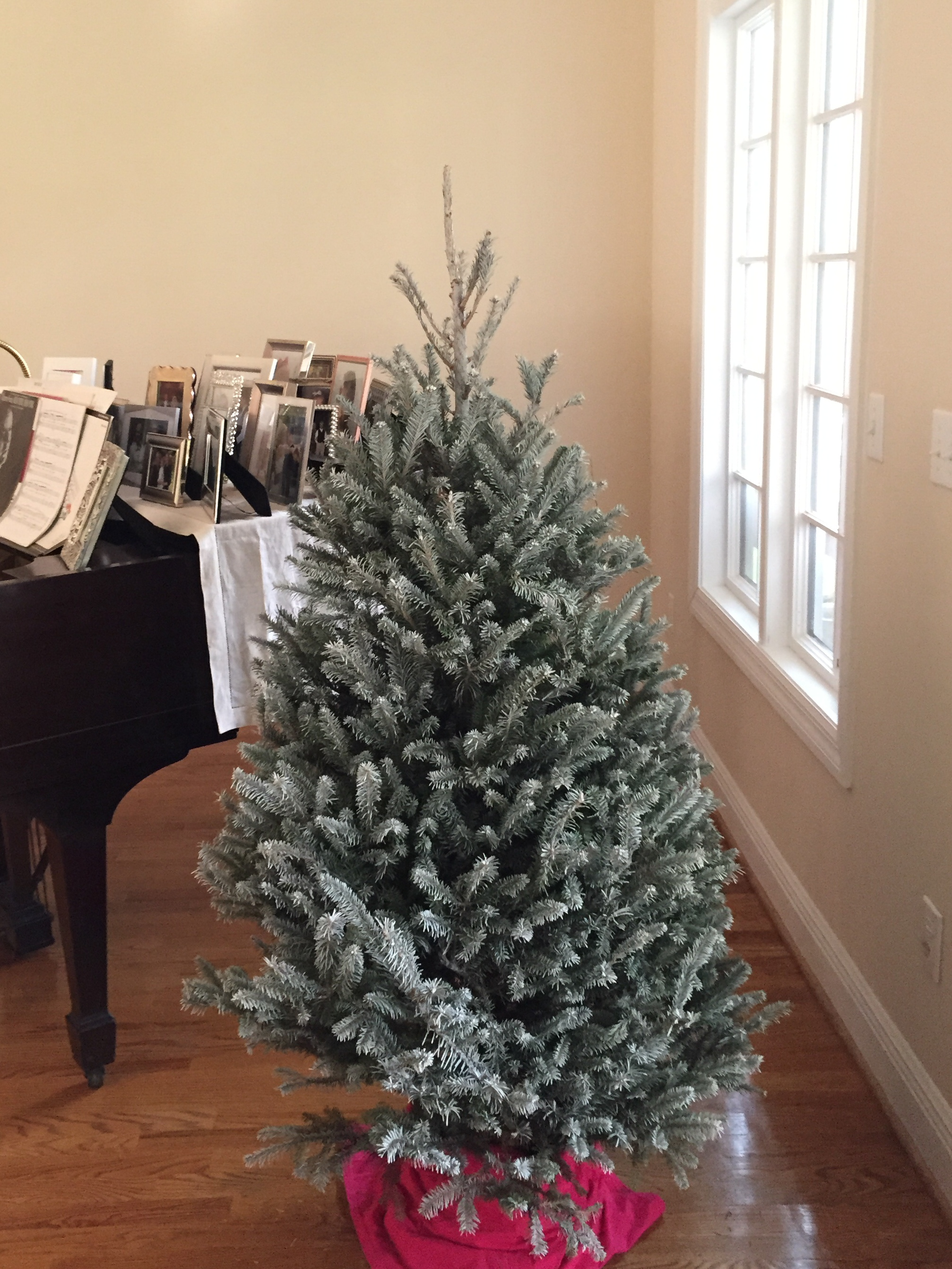 Cartner Frosted Fraser Fir 3' or 4' tall with stand