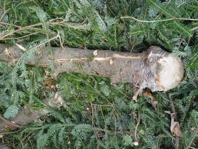 trunk split